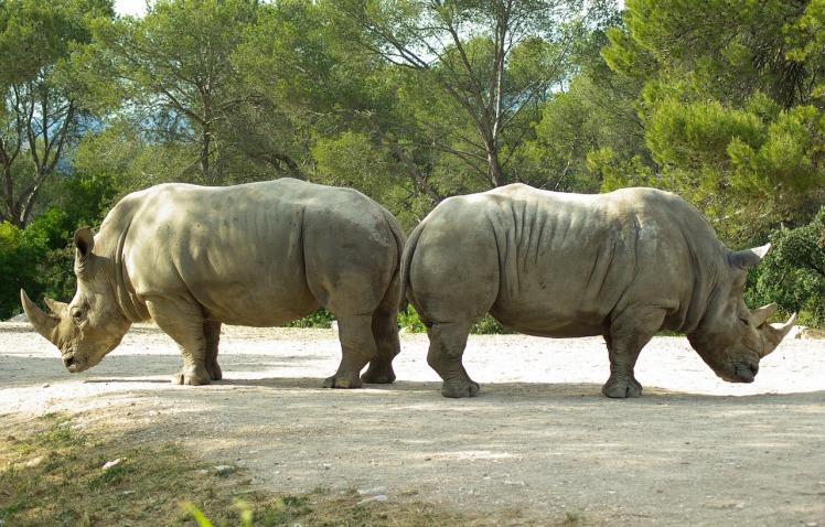 this rhino